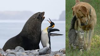 The Best Animal Friendships in the World