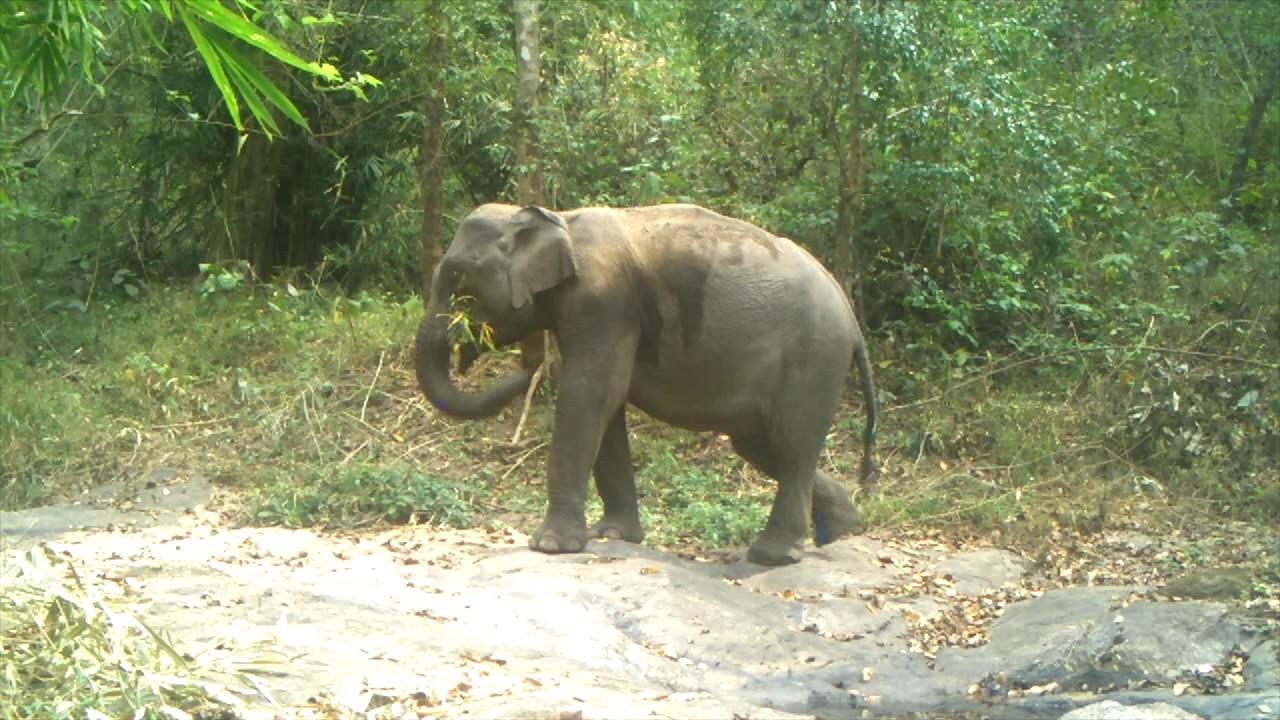 Wildlife Hot Tub in Huai Kha Khaeng Wildlife Sanctuary | WCS Thailand