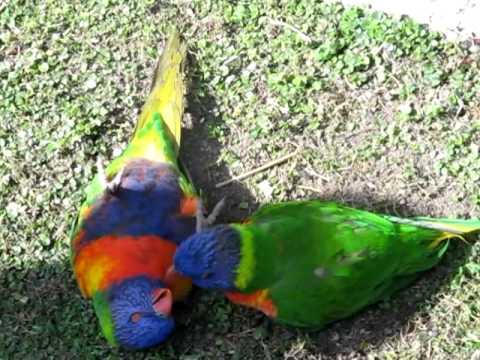 Birdy Sex !