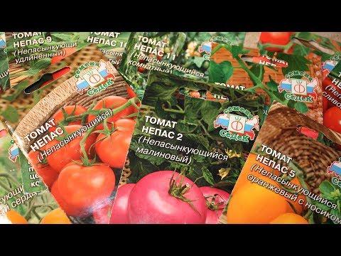 Выбираем семена овощей для грунта и для теплицы  Эти сорта вам понравятся!