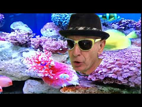BUT CAN YOU DO THIS?   Deep sea diving with no air tanks;Ray Sipe;Comedy;Parody