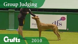 Subscribe to Crufts: http://bit.ly/CruftsSub Pharaoh Hound INT CH N...