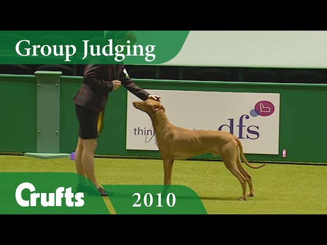 Pharaoh Hound wins Hound Group Judging (Again!) at Crufts 2010 | Crufts Classics