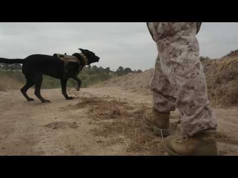 Hard Corps Jobs: Dog Handler