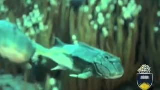 Секс придумали рыбы, жившие 385 млн лет назад