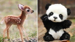 Śmieszne zwierzęta, Najbardziej uroczych dzieci zwierząt #1