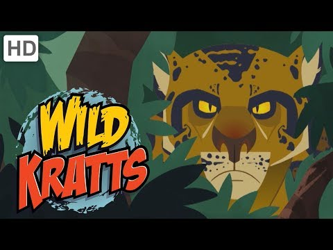 Wild Kratts - The Deadliest Felines in Nature