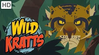 Wild Kratts: Searching for Jaguars thumbnail
