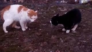 Весна коты и кошки запели!