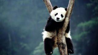 فيديو رائع عن الحيوانات HD