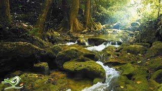 """Beautiful Relaxing Music: """"Morning Whisper"""" by Peder B. Helland (Official Video)"""