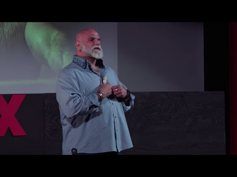What The Bears Can Teach Goldilocks | Frank Strona | TEDxProvincetown