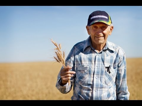 Organic Sprouted Vegan Wheat | Schmidt Family Farm