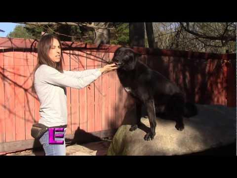 La Encantadora de Lobos - Capitulo 5, Entrenando al lobo negro