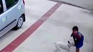 В США собака напала на девочку и покусала её