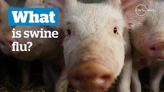 What is swine 'flu?