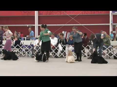 The 2016 ASC Cocker Spaniel National Junior Showmanship Competition