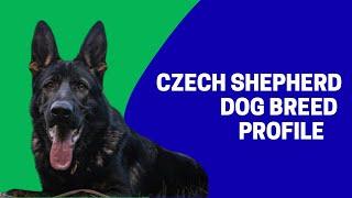 Czech Shepherd  Dog Breed Profile Characteristics