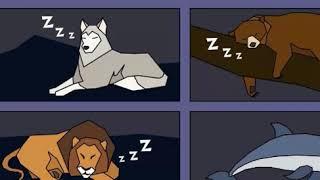 Вы – Медведь, Лев, Волк или Дельфин! Узнайте свой ТИП СНА!
