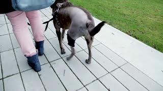 Cruciate Ligament Rupture Dog