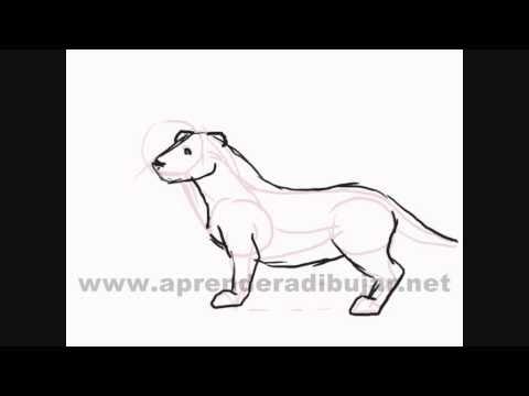 Como dibujar animales sencillos paso a paso - YouTube