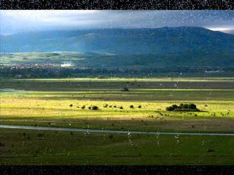 thompson zeleno je bilo polje