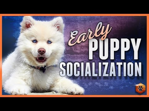 Early Puppy Socialization - Advice, Research, Power Tips