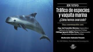 Tráfico de especies y vaquita marina. ¿Cómo hemos avanzado?