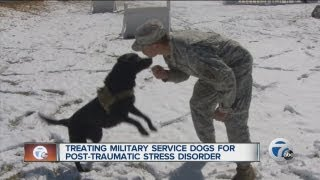 Training Military Service Dogs For Ptsd