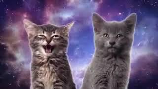 Танцы кошек
