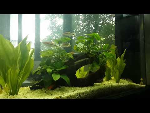 ตู้ปลาสวยงาม PL fish tank ตู้ปลา ปลาสวยงาม