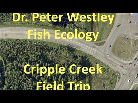 Dr. Peter Westley - Fish Ecology Cripple Creek Field Trip