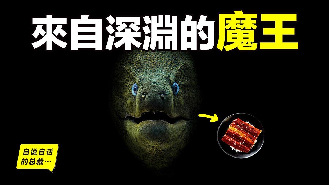 鰻魚:來自深淵的魔王,就像生化機械一樣,但它們真的要滅絕了,我們可能再也吃不到鰻魚飯了……|自說自話的總裁