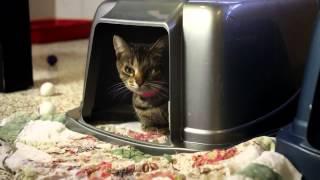 Социальная реклама про бездомных кошек