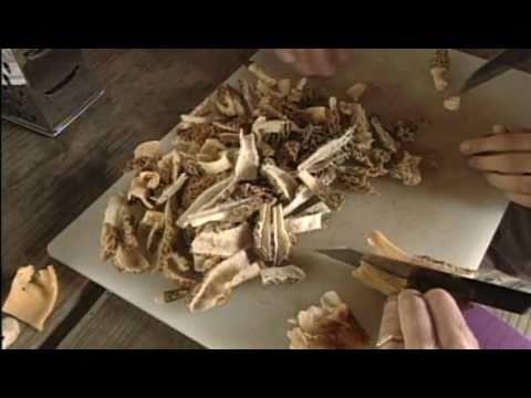 Morel Mushrooms In Missouri
