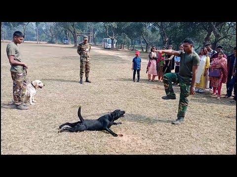 Army Animal Training Special Hand Signal - Dog Expert Show || ZiON Salman ||