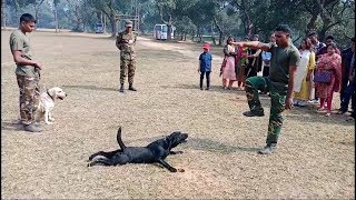 Army Animal Training Special Hand Signal - Dog Expert Show || ZiON Salman ||