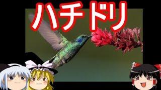 世の中には変わった鳥がおりまして、普段の生活ではまったく出会わない...