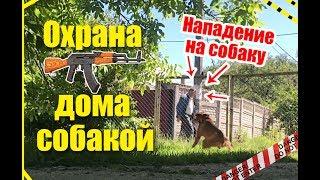 Охрана дома собакой: боксер - нападение на собаку во время охраны территории