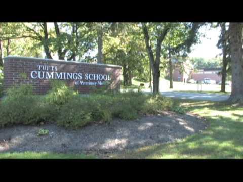 Tufts University-Veterinary Education, MVMA