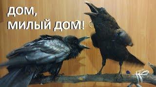 ДОМ, МИЛЫЙ ДОМ! thumbnail