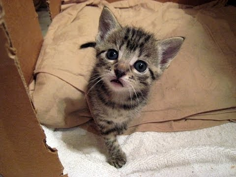 Kitty Cate & Her Kittens - Vlog 1