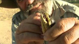Rob Bredl - Tiger Snake Tango
