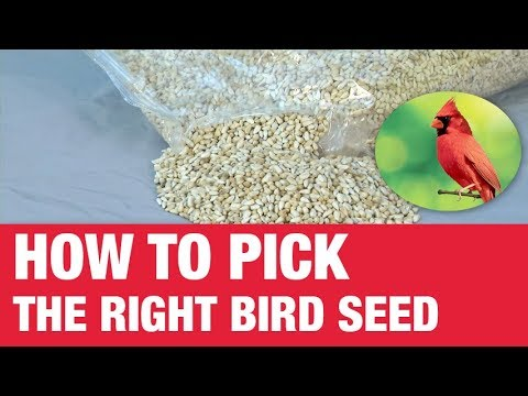 How To Pick Bird Seed - Ace Hardware
