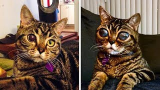 Cats Eyes Won't Stop Growing. Vet Finds The Cause And Starts Crying.
