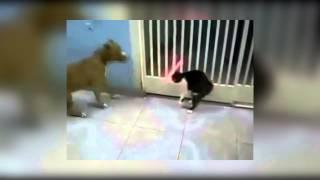 Кот джедай, против собаки Cat vs dog   laser sword