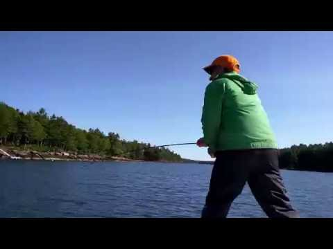 FLY FISHING IN MAINE-- SEAL STEALS STRIPER