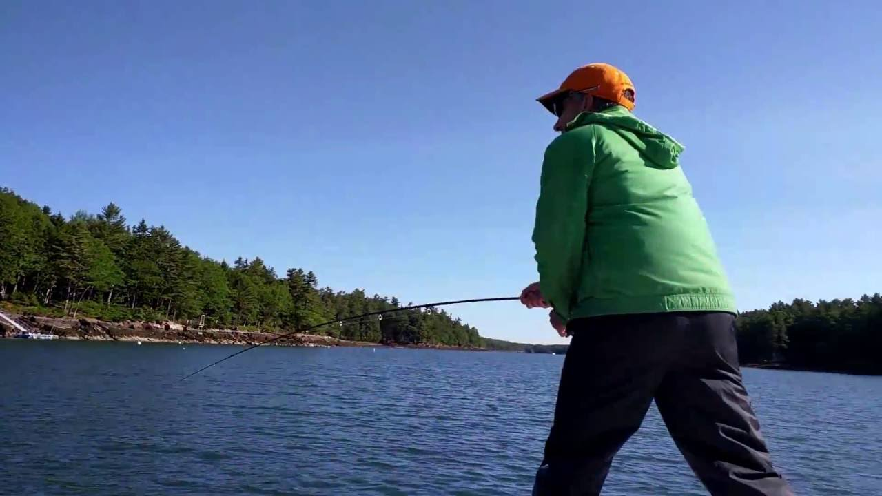 Fly fishing in maine seal steals striper youtube for Fly fishing in maine