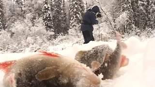 По клевым местам. Рыбалка на Северной Сосьве