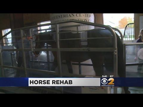 Race Horse Rehab Center
